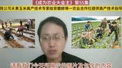 第55集 我公司水果玉米高产技术专家给安微蚌埠一农业合作社提供高产技术指导