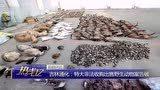 吉林通化特大非法收购出售野生动物案告破