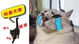 主人让我和两只又凶又丑的猫住在一起,一进门我就被打了