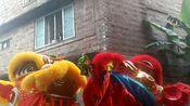 正月初三广西玉林舞狮拜年