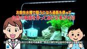【日本水作Suisaku水族用品】內置空氣過濾器 & 內置過濾器演示