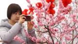 """春节假期快来西安植物园赏梅 姓名中有""""梅""""字的游客可免费游览!"""