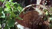 猪小肠还能这样吃?绿豆鱼腥草一起炖,听说还有清热降火的功效!