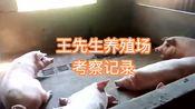 广西玉林市王先生养殖场考察视频