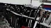 你敢相信么,黑龙江七台河昨天下雪,今天下冰雹,我的天呐