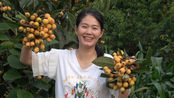 农村小院里树上的枇杷黄的诱人,晨晨摘了一篮子,5朵金花1分钟就抢光了