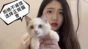 【布偶猫】2500买猫??!!是捡到便宜还是…?请选择正规猫舍!