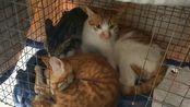 【捡猫】记录第三百七十九天,全部康复出院!