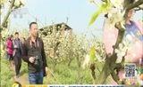 [第一时间]看天下 四川泸州:梨花烂漫满枝头 游客蜂农喜开怀