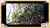 喝茶要喝花茶,花茶首选(岜马源降三高金花茶)九月江南花事休—在线播放—优酷网,视频高清在线观看