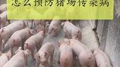 怎么预防猪场传染病