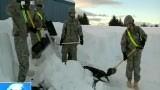 美国 降雪成灾 阿拉斯加小镇被埋