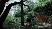 新水浒传:老虎竟如此凶猛,急的武松出了一身大汗