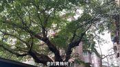 泸州明清时期的西门城墙遗址在哪里?沽酒客带你一起探寻