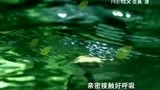 中国庄典天下9.3(30秒带招商电话网址)
