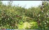 [山西新闻联播]简讯:40余家媒体走进运城领略特色农业产业发展