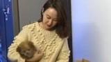 上海美女花38万为爱犬复活,宠物克隆成为爱宠新方式