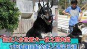 狗主人去世爱犬一夜之间失踪,一年后让误解的家人痛哭流涕!