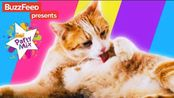 【BuzzFeedVideo】猫教会你的七件事 7 Life Lessons Your Cat Can Teach You