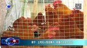 南宁:土鸡无人售卖摊点 称重付款全凭自觉