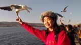 (疫情爆发前视频)来云南昆明旅游,滇池边的喂海鸥姑娘!