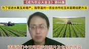 第66集 为了促进种植的水果玉米增产,指导浙江温州一农业合作社在水果玉米苗期追肥方法
