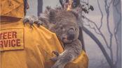 【想要得救】能有多少只考拉有幸遇到消防员啊T^T 澳洲山火惨烈,2019年9月以来仅在新南威尔士就有约4.8亿只野生动物在山林大火中丧生。