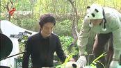 全球唯一大熊猫三胞胎名字公布-萌帅酷