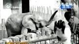 实拍游客与动物合影上演狮口惊魂