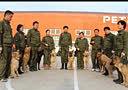 哈尔滨 哪里学习训犬师培训好 派多格