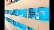 有余水族生态基地强势入驻B站 福建省有余科技有限公司成立于2015年7月,集团旗下拥有有余生态水族、有余音乐餐吧、有余服饰、有余文创等产业。