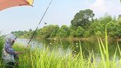 1天能钓20斤鲫鱼的野河,三妹这就赶过去,她能钓多少
