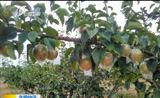 [新闻午报-山西]山西隰县 芮城获批生态原产地产品保护示范区