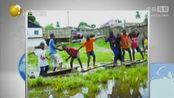 利比里亚高考考生全落榜 无人考中最大国立大学