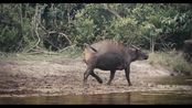I AM CONGO - Rise of Nature/《我是刚果:自然的力量》