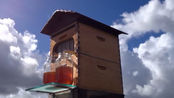全自动蜂巢,自动收集蜂蜜,再也不怕取蜂蜜的时候被叮了