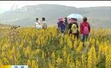 [新闻午报-山西]运城:历山舜王坪花海醉游人