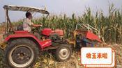 实拍:河南周口收割玉米,多少钱一亩?看看这价格便宜吗?