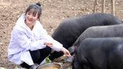 美女大学毕业后养2000头猪至今单身 父亲霸气催婚: 陪嫁300头猪!