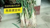 邢台农村开餐馆,丽娟十块钱买了三捆葱,直呼太值了