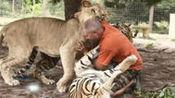 综艺最爆点美国男子爱养宠物:六只老虎两只狮子