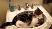 The most popular CAT videos