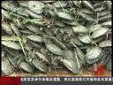 [视频]浙江诸暨浦阳江解放湖段决口 将择机开始封堵大堤决口