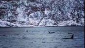 2016.11.28 Troms观鲸—在线播放—优酷网,视频高清在线观看