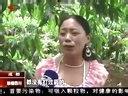 油桃熟了 等你来摘  20130602  联播四川