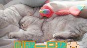 【Nico】努力叫醒一只睡觉的猫(zhu) 超长假期一个人在家的欢乐(wu liao)日常 (2)