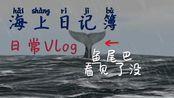 海上刮台风,邂逅大鲸鱼【荒岛求生的小花絮Vlog】