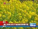 [贵州新闻联播]简讯:铜仁市碧江区5千亩油菜花迎春开放