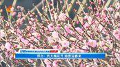 邢台:抗大梅花开 暗香迎春来