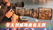 冬天到威海荣成烟墩角天鹅湖来看天鹅!